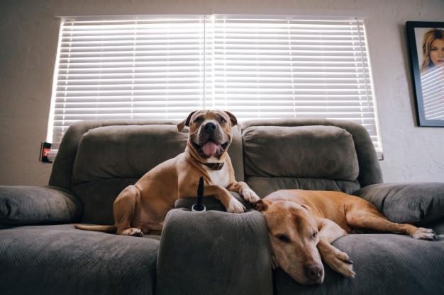 Haz tu vivienda más acogedora para tus mascotas